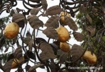 Павловский лимон история